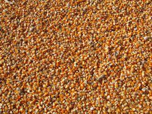 Semillas a granel - Fitocor